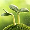 sustainability, environmentalism