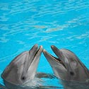 dolphins, signature whistles, speakings